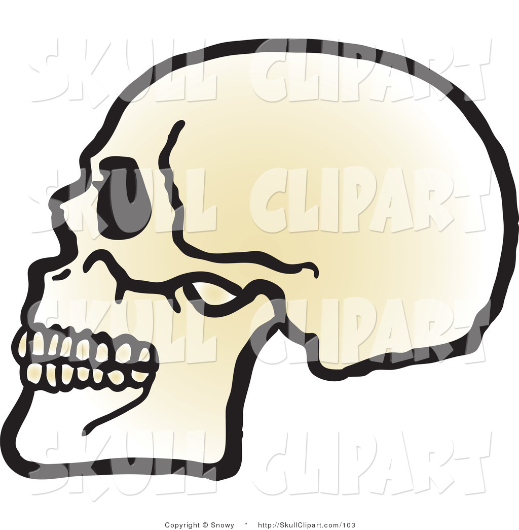 Vector Clip Art of a Profiled Human Skull with Teeth Facing Left by ...