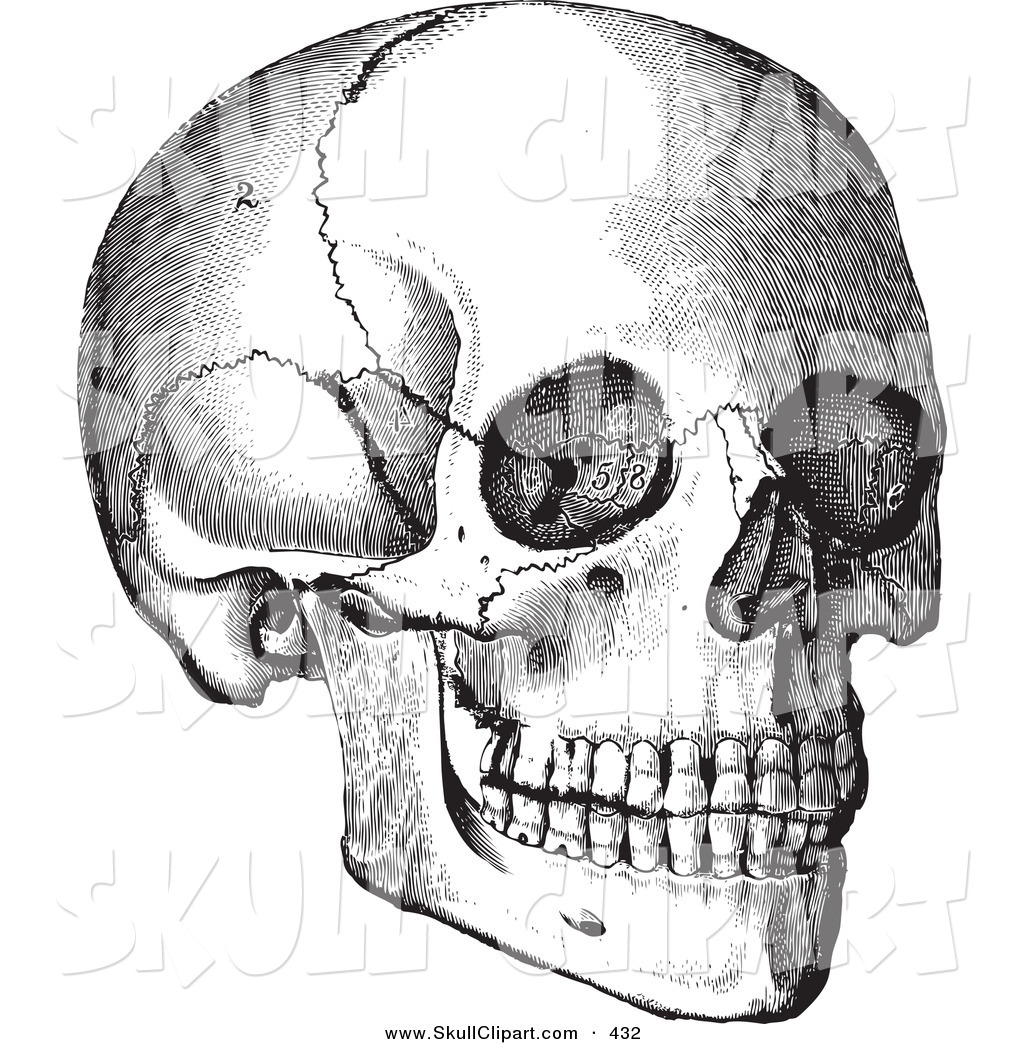 Vector Clip Art of a Vintage Black and White Anatomical Sketch of a ...