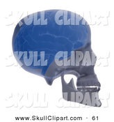 Clip Art of a 3d Brain and Skull Xray Facing Right by Mopic