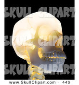 Clip Art of a 3d Glowing Skull Looking Right by Mopic
