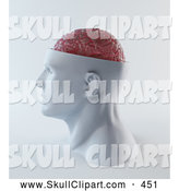 Clip Art of a 3d Head with a Visible Pink Brain Looking Left by Mopic
