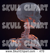 Clip Art of a 3d Human Skeleton Featuring the Shoulder Neck and Skull on Black by Mopic
