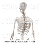 Clip Art of a 3d Human Skeleton Featuring the Spine, on White by Mopic
