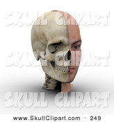 Clip Art of a 3d Male Head Showing Half with Flesh, Half with Bone on White by Michael Schmeling