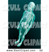 Clip Art of a 3d Male Human Skeleton Xray by Mopic