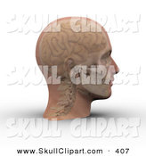Clip Art of a 3d Skull and Brain Showing Through Transparent Skin on a Man's Head by Michael Schmeling