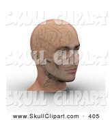 Clip Art of a 3d Skull and Brain Showing Through Transparent Skin on a Man's Skull by Michael Schmeling