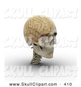 Clip Art of a 3d Transparent Skull with the Visible Brain Looking Right by Michael Schmeling