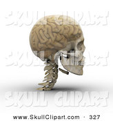 Clip Art of a 3d Transparent Skull with the Visible Brain Looking to the Right by Michael Schmeling