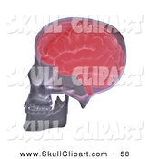 Clip Art of a Red Brain in a Human Skull Skeleton by Mopic
