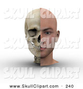Clip Art of an Anatomical 3d Male Head Showing Half with Flesh, Half with Bone by Michael Schmeling