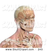 Vector Clip Art of a 3d Male Head and Shoulders with Transparent Muscles Showing Bone and Brain by Michael Schmeling