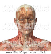 Vector Clip Art of a 3d Male Head and Shoulders with Transparent Muscles with the Skull and Brain by Michael Schmeling