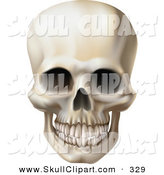 Vector Clip Art of a Creepy Grinning Human Skull with a Clenched Jaw by AtStockIllustration
