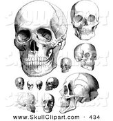 Vector Clip Art of a Digital Set of Vintage Black and White Anatomical Sketches of Human Skulls by BestVector
