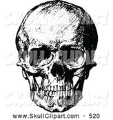 Vector Clip Art of a Greyscale Vintage Black and White Human Skull by Prawny Vintage
