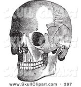 Vector Clip Art of a Grinning Vintage Black and White Anatomical Sketch of a Human Skull by BestVector