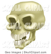 Vector Clip Art of a Human Skull Baring Teeth by AtStockIllustration