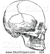 Vector Clip Art of a Medical Sketch Vintage Black and White Human Skull by Prawny Vintage