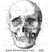 Vector Clip Art of a Sketch of a Vintage Black and White Anatomical Sketch of a Human Skull by BestVector