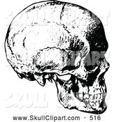 Vector Clip Art of a Sketched Vintage Black and White Human Skull Side View by Prawny Vintage