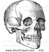 Vector Clip Art of a Vintage Black and White Anatomical Sketch of a Human Skull Looking Right by BestVector