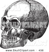 Vector Clip Art of a Vintage Black and White Anatomical Sketch of a Human Skull on White by BestVector