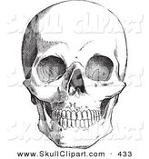 Vector Clip Art of a Vintage Black and White Anatomical Sketch of a Human Skull over a White Background by BestVector
