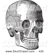 Vector Clip Art of a Vintage Black and White Anatomical Sketch of a Human Skull over White by BestVector