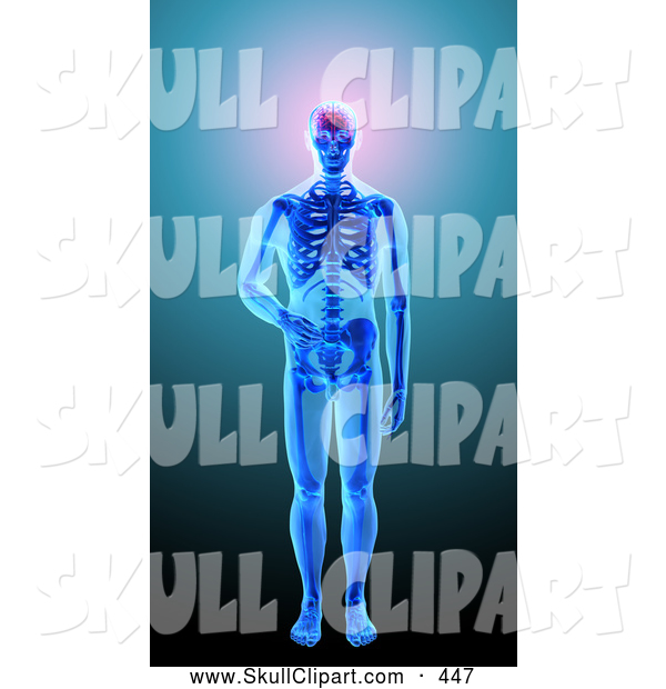 Clip Art of a 3d Blue Human Skeleton with Visible Brain Skin and Bones on Blue