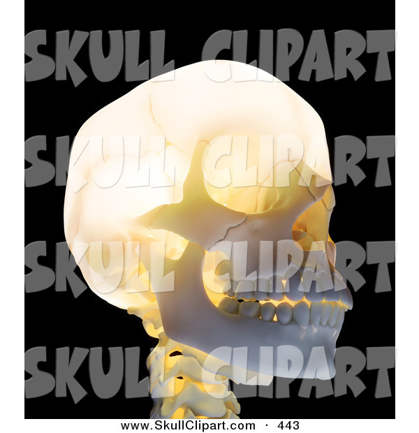 Clip Art of a 3d Glowing Skull Looking Right
