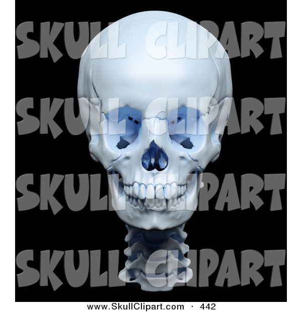 Clip Art of a 3d Highly Accurate Render of a Human Skull on Black