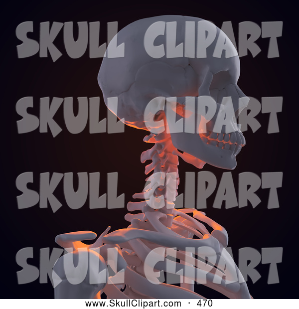 Clip Art of a 3d Human Skeleton Featuring the Shoulder Neck and Skull on Black