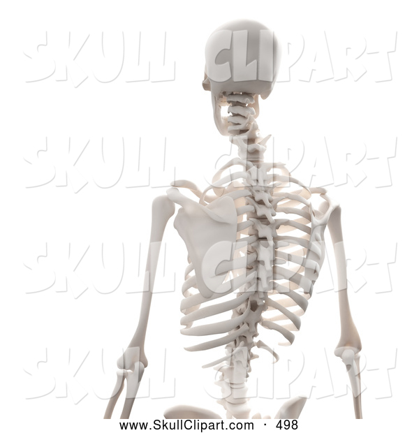 Clip Art of a 3d Human Skeleton Featuring the Spine, on White