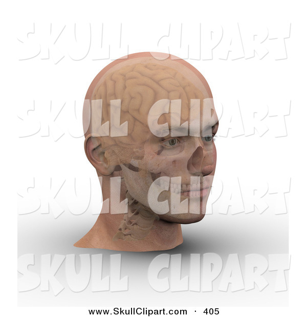 Clip Art of a 3d Skull and Brain Showing Through Transparent Skin on a Man's Skull