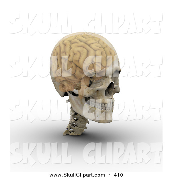 Clip Art of a 3d Transparent Skull with the Visible Brain Looking Right