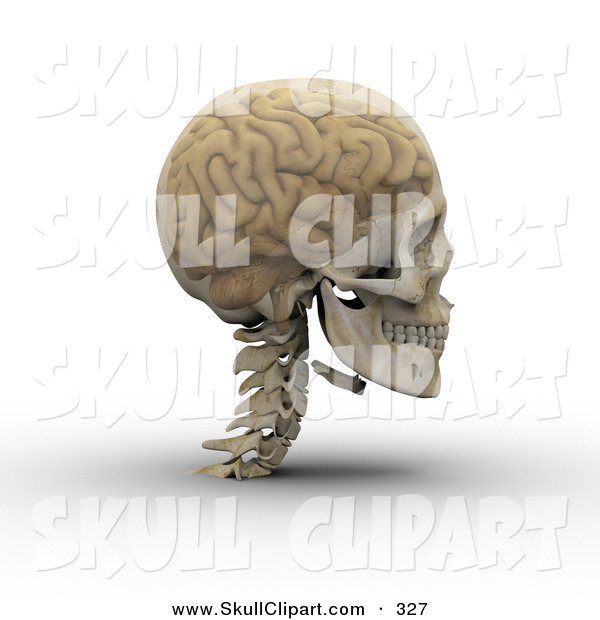 Clip Art of a 3d Transparent Skull with the Visible Brain Looking to the Right