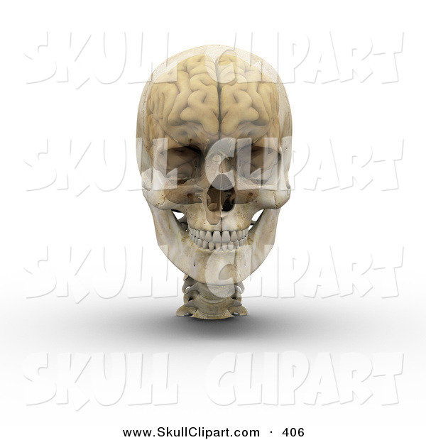 Clip Art of a 3d Transparent Skull with the Visible Brain on White