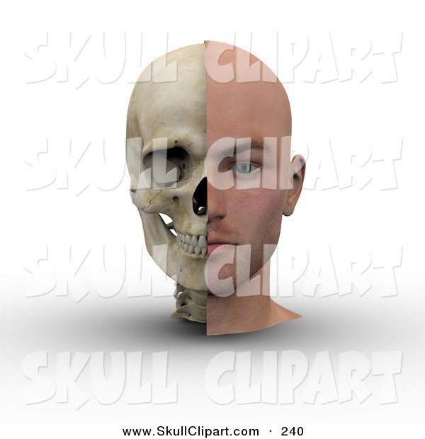 Clip Art of an Anatomical 3d Male Head Showing Half with Flesh, Half with Bone