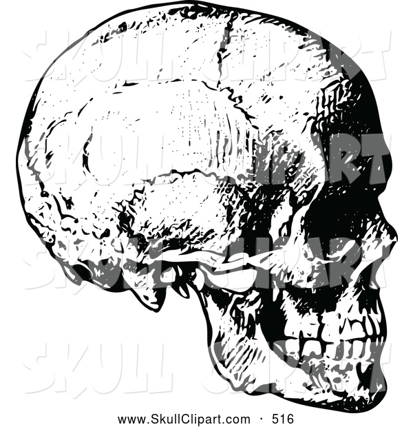 Vector Clip Art of a Sketched Vintage Black and White Human Skull Side View