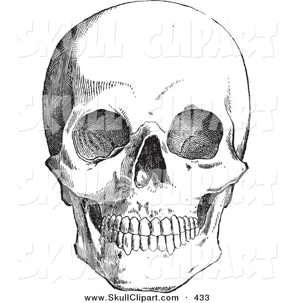Vector Clip Art of a Vintage Black and White Anatomical Sketch of a Human Skull over a White Background